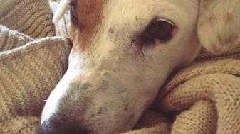לוק. כלבו של הדיקן אלון גייר