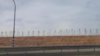 פרויקט הייעור בסמוך לקיבוץ ארז. צילום: דור שאלתיאל